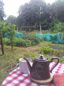 more tea
