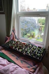 seedlings bedroom