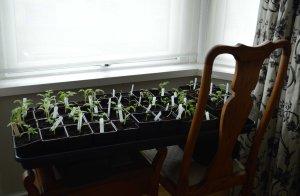 seedlings salon