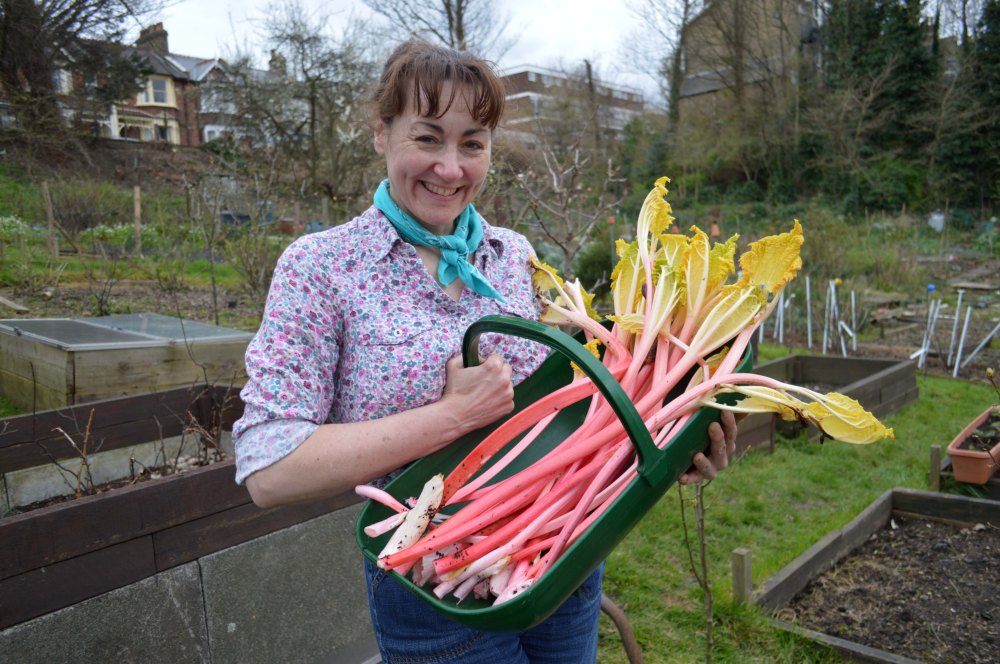 trug of rhubarb