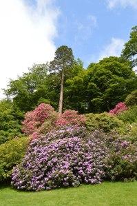 low Stourhead rhodedendrum season 1_Sandra Lawrence