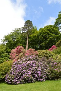 low Stourhead rhodedendrum season 1_Sandra Lawrence