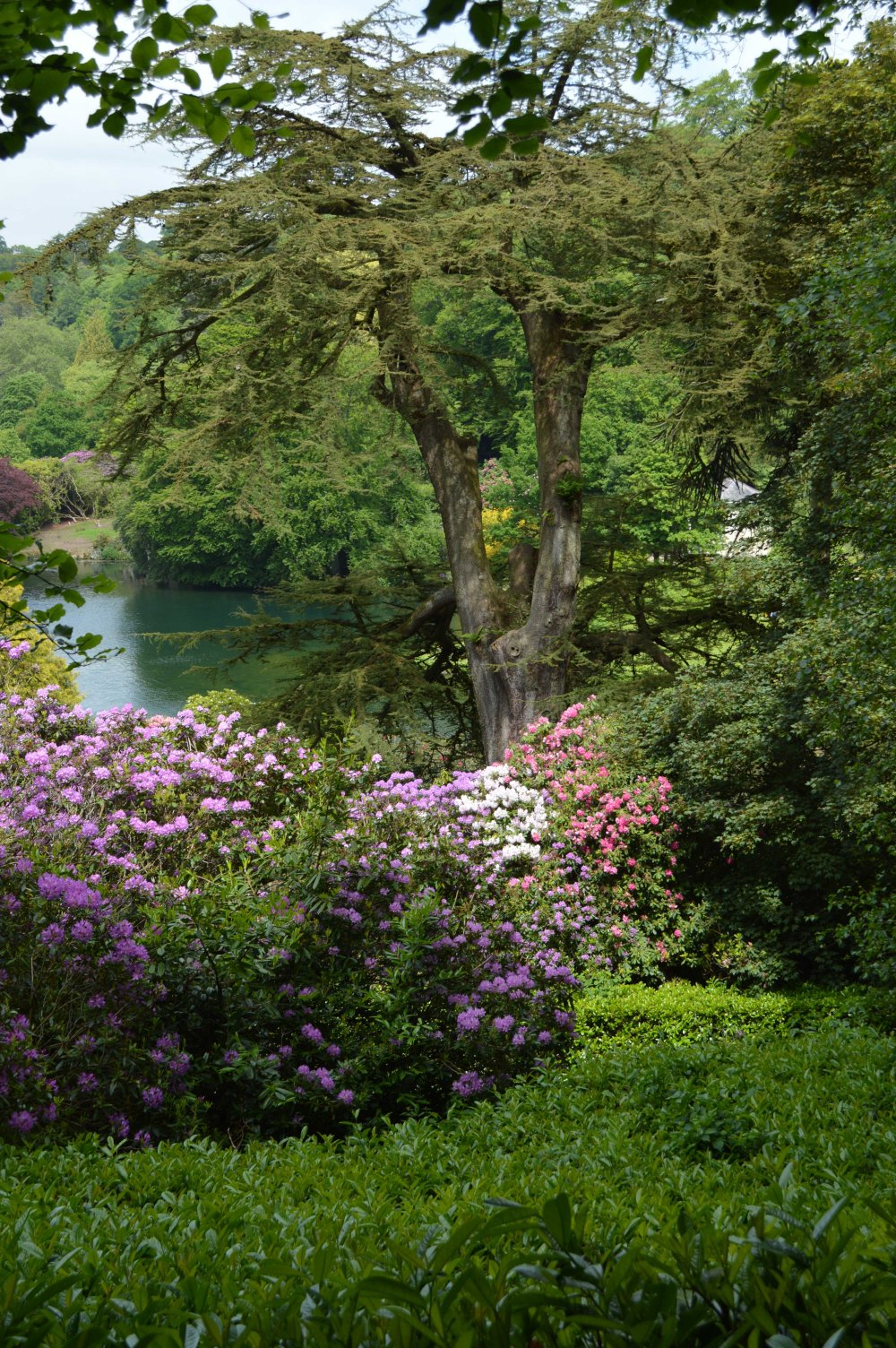 low Stourhead Rhodedendrum season_Sandra Lawrence