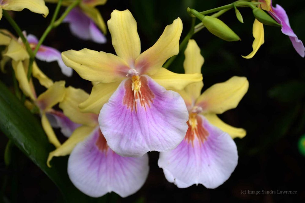 low-orchids-11