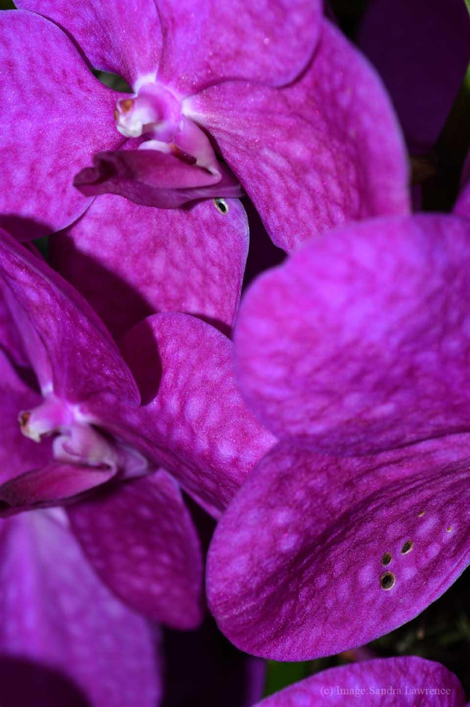 low-orchids-12