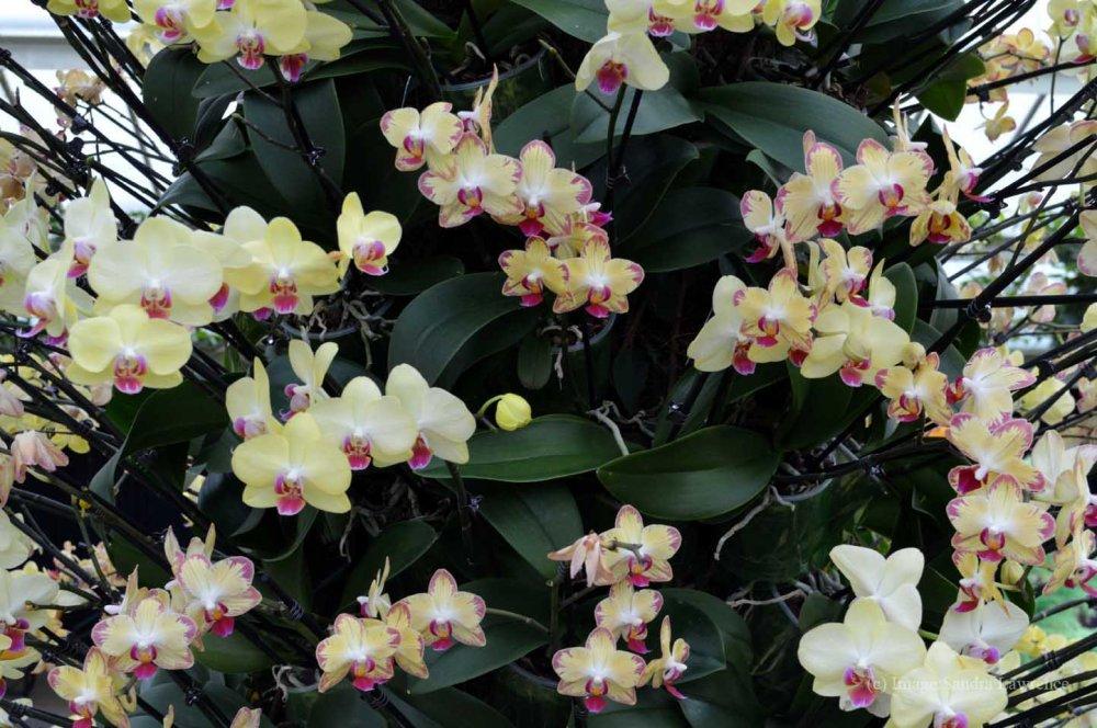 low-orchids-16