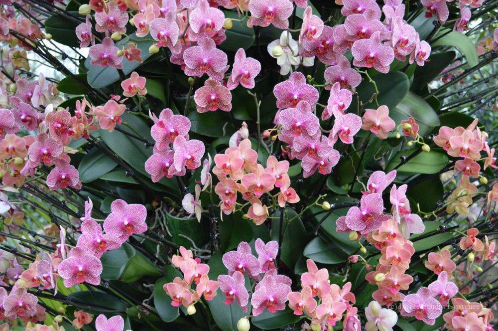 low-orchids-19