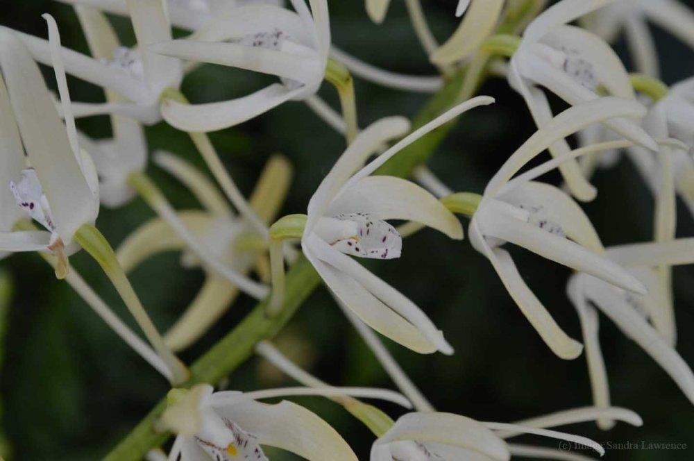 low-orchids-5
