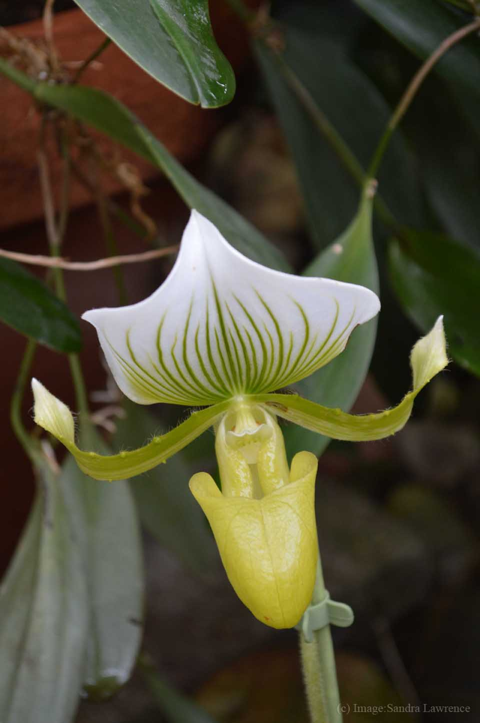 low-orchids-6