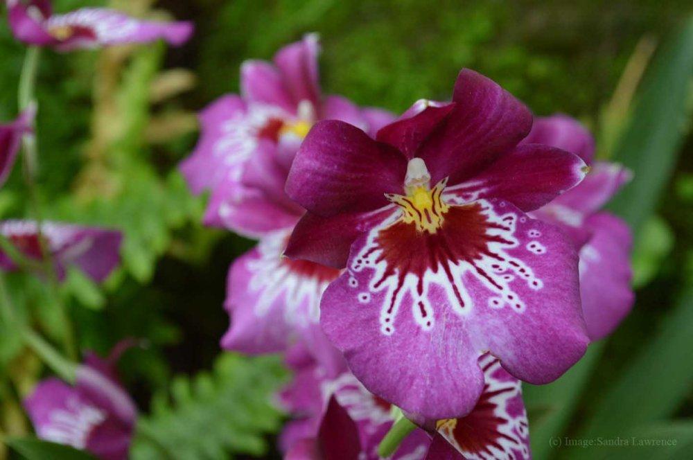 low-orchids-7