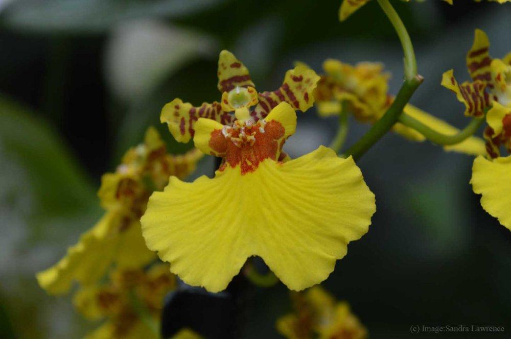 low-orchids-8