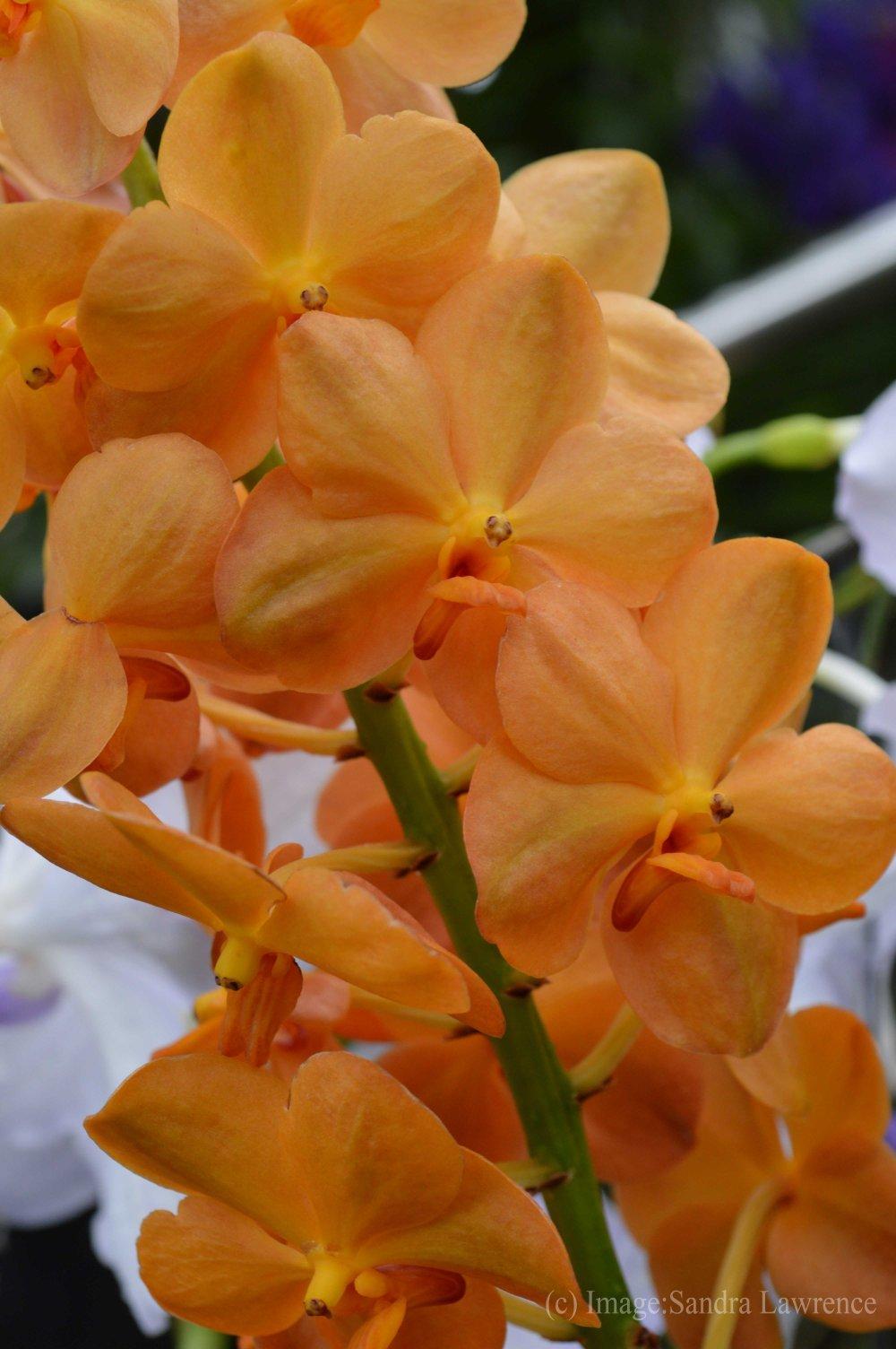 low-orchids-9