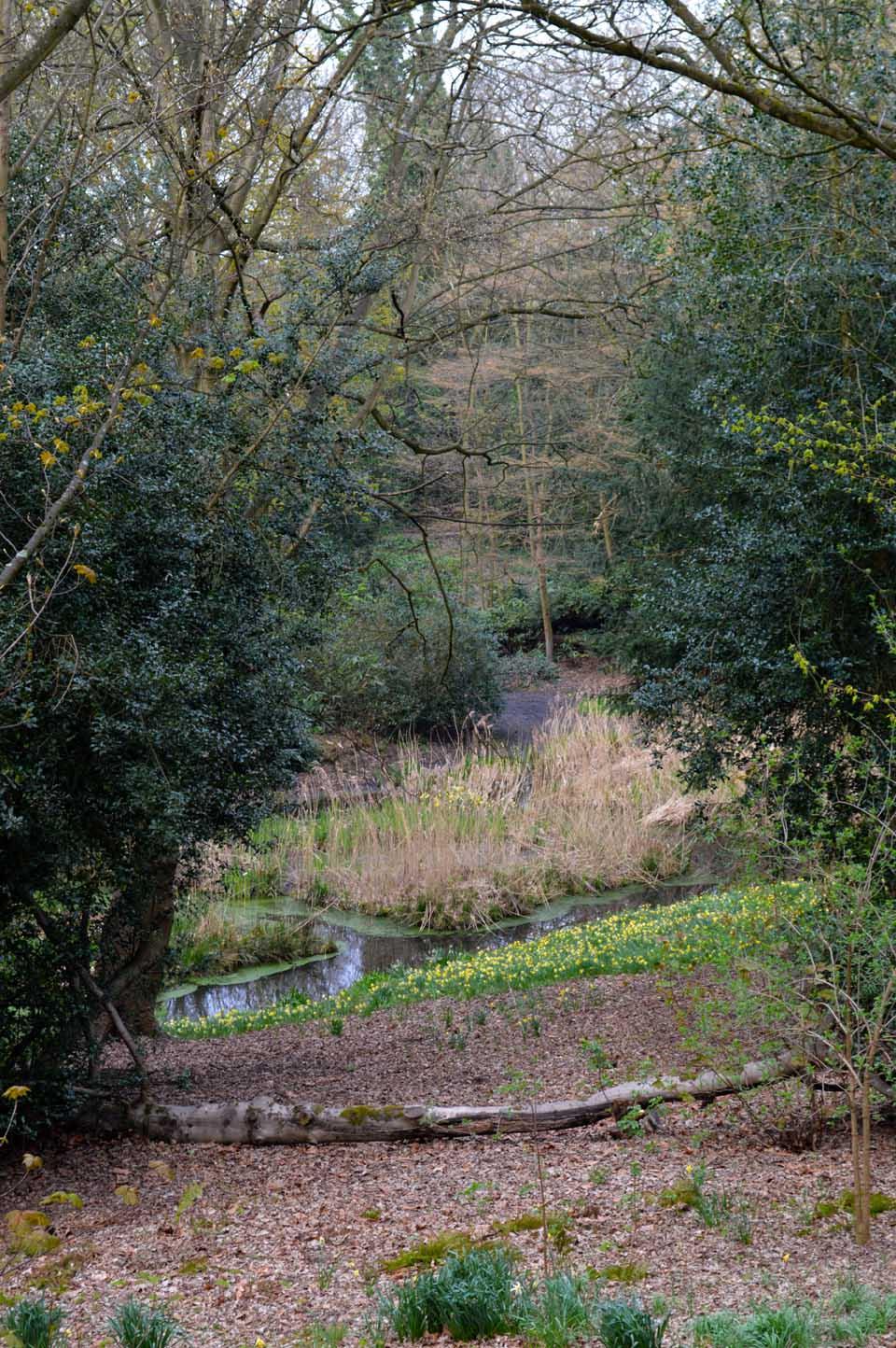 low carp pond