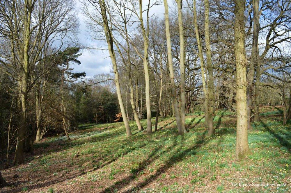 Warley Spring 120