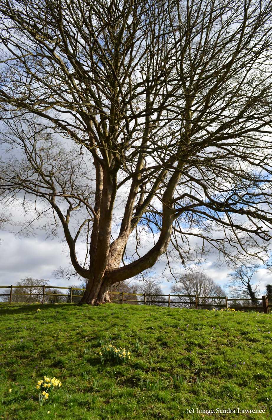 Warley spring 2