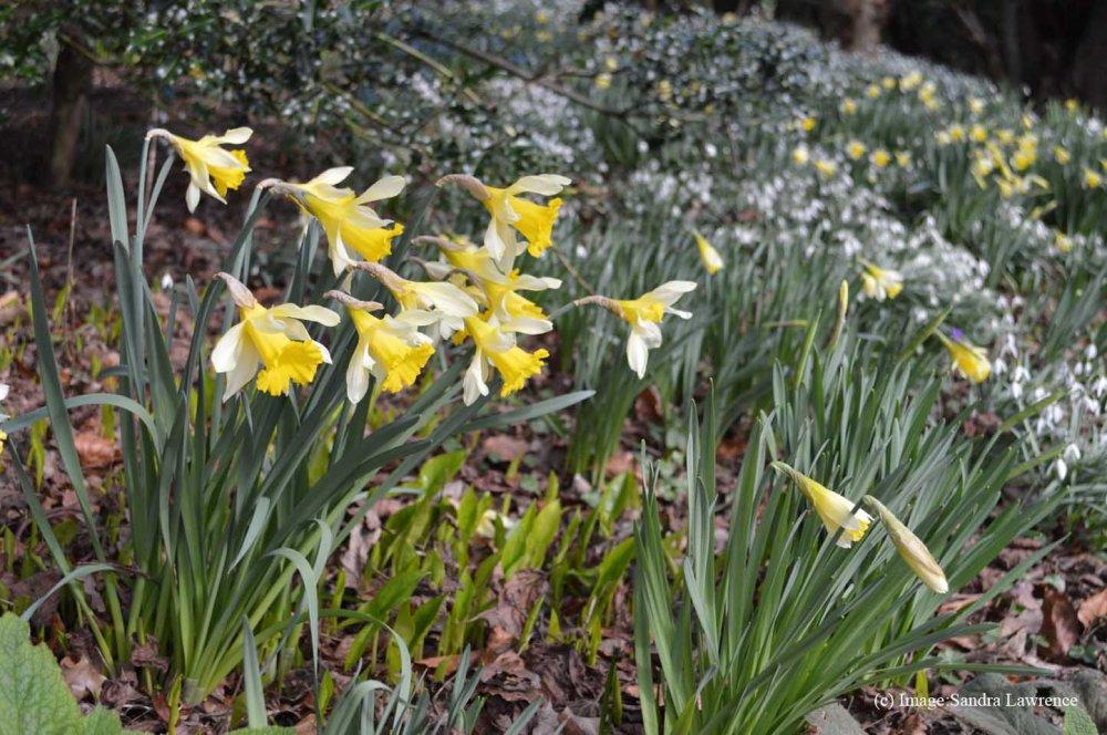 Warley spring 23