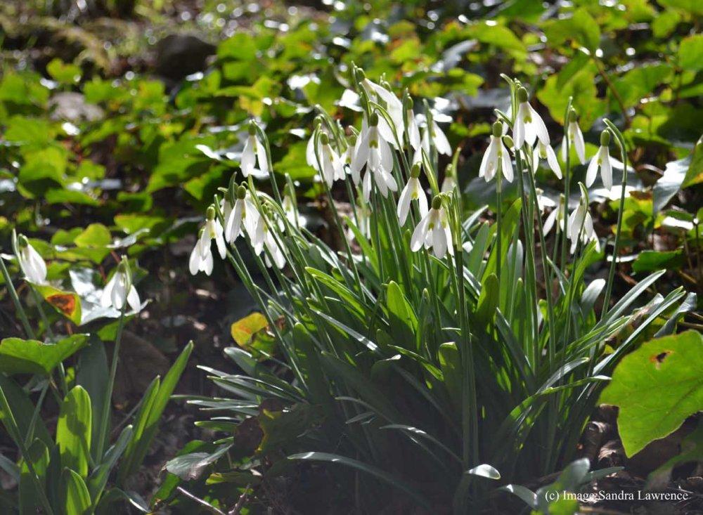 Warley spring 5