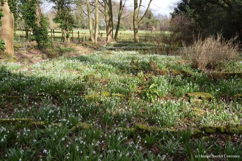 Warley spring 9
