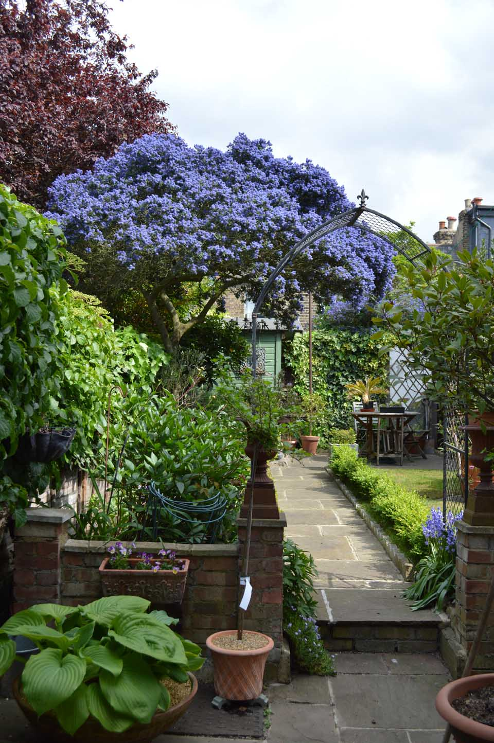 ceanothus and bluebells
