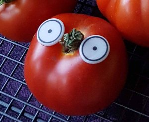 eager tomato